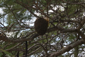 Local bee hive